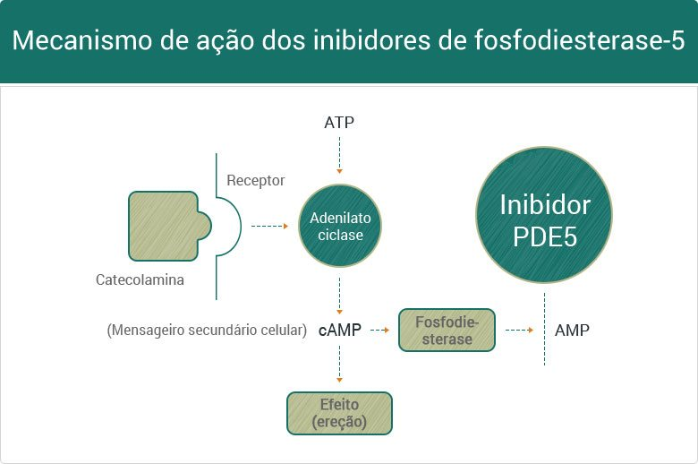 Mecanismo de ação dos inibidores da PDE-5