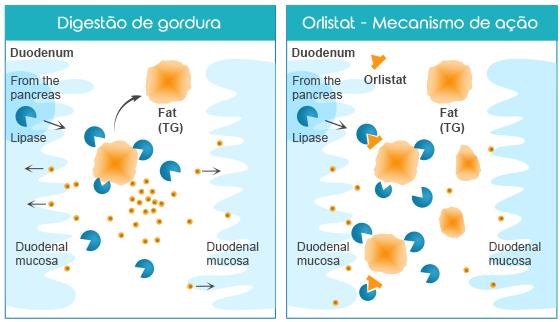Como funciona o Orlistato?